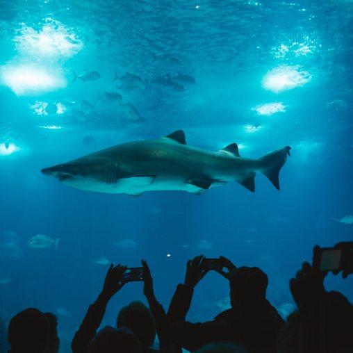 what is aquarium
